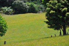Hilside Новой Зеландии Стоковые Фото