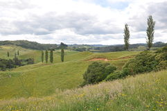 Hilside Новой Зеландии Стоковое фото RF
