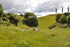 Hilside de Nueva Zelanda Fotografía de archivo libre de regalías