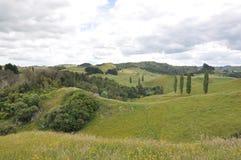 Hilside de Nueva Zelanda Fotos de archivo libres de regalías