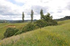 Hilside della Nuova Zelanda Fotografia Stock