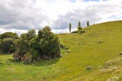 Hilside van Nieuw Zeeland Stock Afbeeldingen