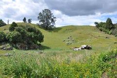 Hilside van Nieuw Zeeland Royalty-vrije Stock Foto's
