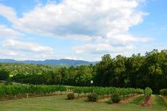 Hilside vineyard Royalty Free Stock Image