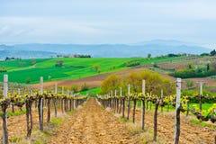 Hilsl of Tuscany Stock Photos