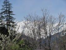 Himachal Pradesh är egentligen snöig!! Royaltyfria Bilder