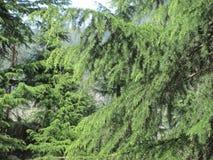Himachal Pradesh i swój piękno Fotografia Royalty Free