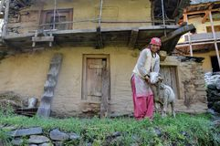 Himachali lady with her sheep. Himachali lady with her sheep standing outside an abandoned house in Shimla, Himachal Pradesh, India Royalty Free Stock Photo