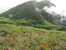 Himalaja-Knotweed im Tal von Blumen Stockfoto