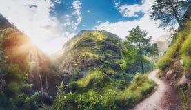 Himalajaberge umfassten grünes Gras und ay Sonnenuntergang der Bäume stockfotografie