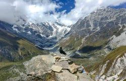 Himalajakrähe an einer Höhe von 4400 Metern über Meeresspiegel lizenzfreie stockfotos