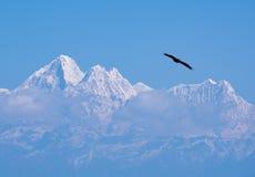 Himalajavogel Lizenzfreies Stockbild