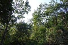 Himalaje Lasowy baldachim Obraz Royalty Free
