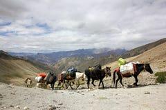 Himalajska Końska karawana Zdjęcia Royalty Free
