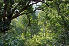 Himalajski las Obrazy Royalty Free