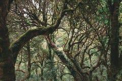 Himalajski tropikalny tropikalny las deszczowy obrazy stock