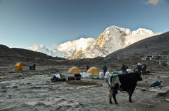 Himalaya campsite Royalty Free Stock Image