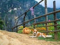 Himalaya, Tibet, Bhutan, Paro Taktsan, Taktsang Palphug Monaster. Y (also known as The Tiger's Nest Stock Image