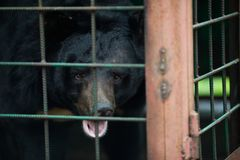 Himalayan bear in an iron cage. royalty free stock photo