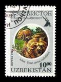 Himalayan Brown Bear (Ursus arctos isabellinus), Tashkent Zoo se royalty free stock photo