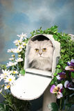 Himalayan cat in a mailbox Royalty Free Stock Photo