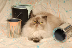 Himalayan Cat and Paint Cans. A seal point Himalayan cat lays on a splattered backdrop with paint cans stock images
