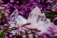 Himalayan Clear Quartz Clusters with Hematite inclusions surrounded by purple lilac flower. Himalayan Clear Quartz Clusters with Hematite inclusions surrounded stock images