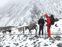 Himalayan expedition - passing Thorong La pass - Nepal. Snowy and windy weather on mountain expedition, Annapurna, Himalaya, Nepal stock photos