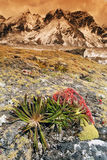 Himalayan Flora, Nepal. There are very colourful plants at 4000 m high in Himalaya Stock Photos