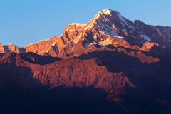 Himalayan giant glowing in the evening. Snow covered peak glowing red during evening Royalty Free Stock Image