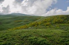 Himalayan Grasslands. A beautiful view of Himalayan grasslands Royalty Free Stock Photo
