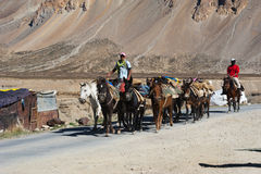 Himalayan herdsmen leads horses caravan Stock Photo