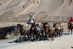 Himalayan herdsmen leads horses caravan Royalty Free Stock Image