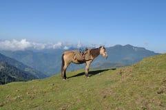 Himalayan horse. Royalty Free Stock Photography