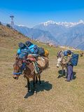 Himalayan Laden mules and guide Stock Photo