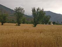 Himalayan mountain steppe terrace farmland n wheat fields Stock Photography