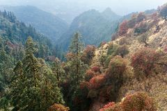 The Himalayan Mountains, Nepal. Flowering rhododendrons. stock photography