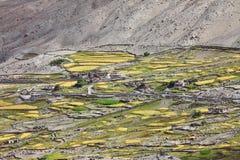 Himalayan oasis Stock Images