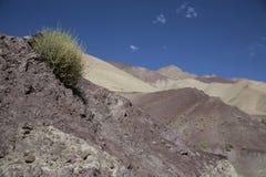 Himalayan område Arkivbilder