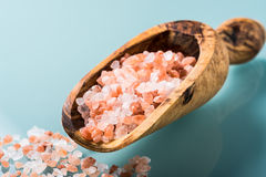 Himalayan pink salt on a olive wood spoon Stock Photos
