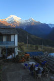 Himalayan residents royalty free stock photography