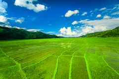 Himalayan rice field, Nepal Royalty Free Stock Photography