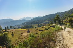 Himalayan Rice Fields by trekking trail.. stock photography