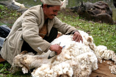 Himalayan Sheep Shearer Royalty Free Stock Photos