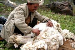 Himalayan Sheep Shearer. A Kinauri Herdsman shears the woolen fleece of his sheep below the Bhaba Pass in the Indian      Himalaya mountains of Kinnaur Valley Royalty Free Stock Photos