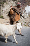 Himalayan shepherd from India, Lahoul Valley. INDIA,  LAHOUL VALLEY - SEPTEMBER 5. Himalayan shepherd from Lahoul Valley leads his goat and sheep flock. India Stock Photography