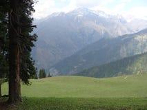 Himalayan skönhet Royaltyfri Foto