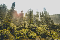 Himalayan skog med solstrålar royaltyfria bilder