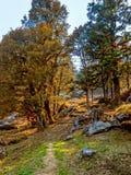 Himalayan skogar Arkivbild