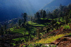 Himalayan Stepped Fields Nepal Royalty Free Stock Photos